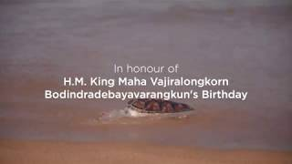 The 10th Mai Khao Marine Turtles Release Ceremony 2019