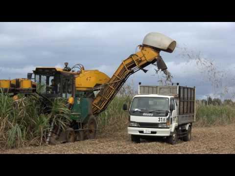 20170128南大東島のキビ刈りハーベスター