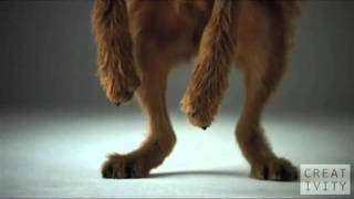 Креативная реклама(Это видео - креативная реклама Pedigree. Собак снимали камерой высокого разрешения с частотой 1000 кадров в секун..., 2012-02-04T15:44:39.000Z)