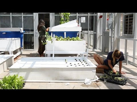 Advancing Aquaponics At Wrigley Marine Science Center