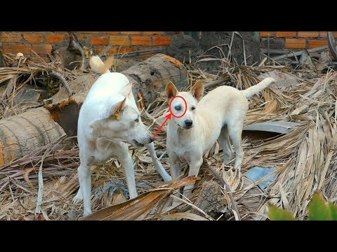 Funny and Cute Dogs 2019|Doghs looking to catch mice