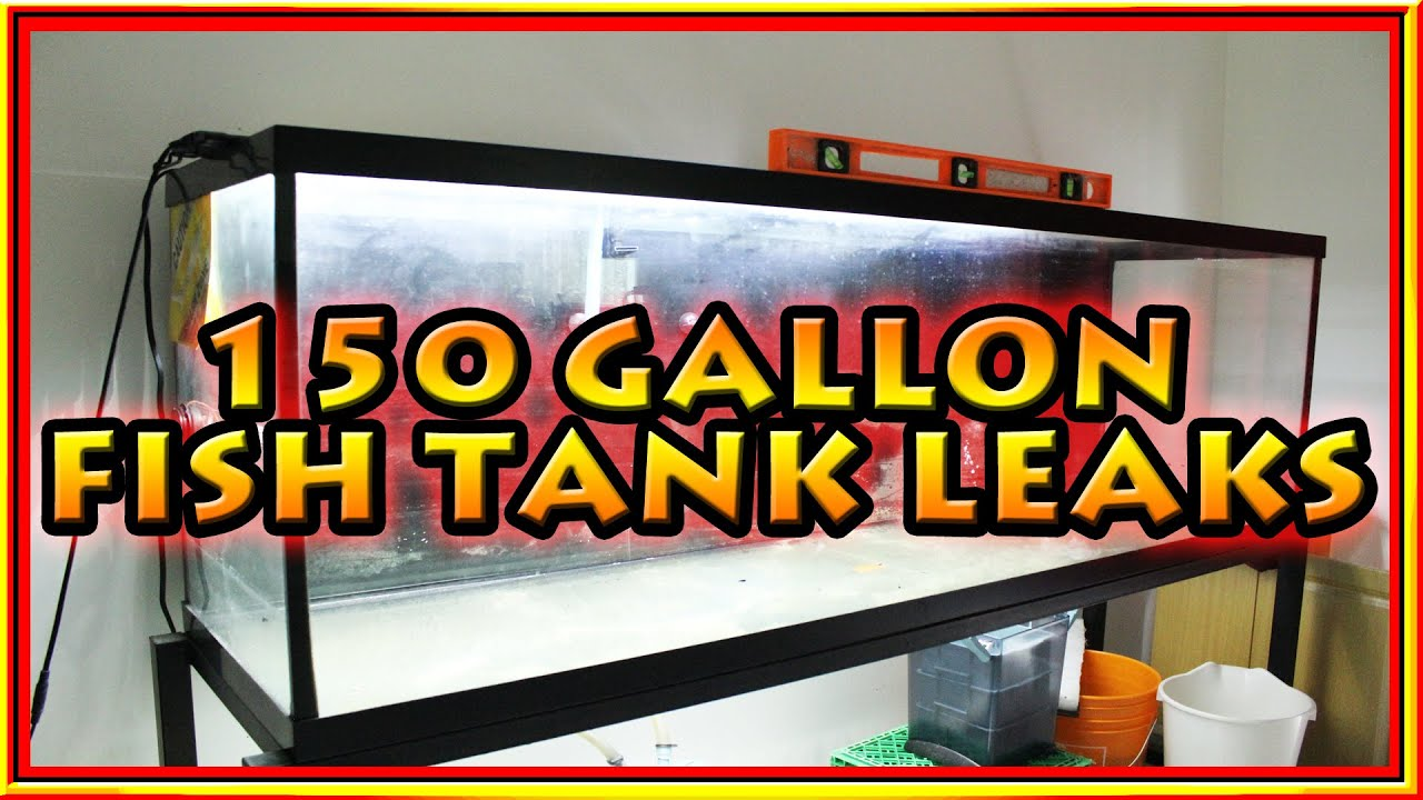 150 gallon fish tank leaks youtube for How to fix a leaking fish tank