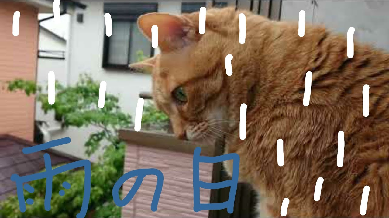 雨を見るナナちゃん猫
