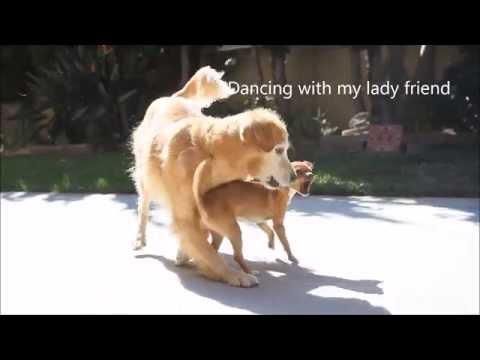 Logans Adoption Video- I.C.A.R.E Dog Rescue