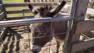 Sony a7Riv Farm Animals