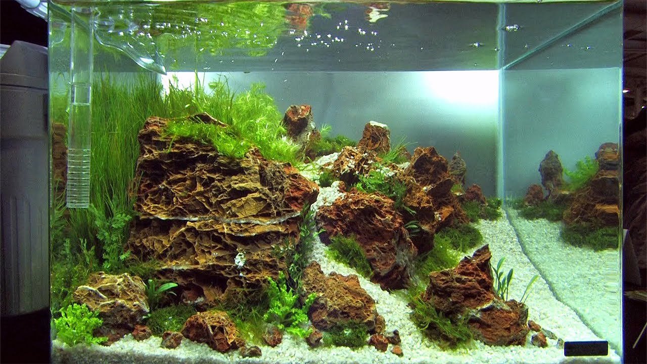 Nano Tanks Of The Aquascaping Contest Quot The Art Of The Planted Aquarium Quot 2014 Pt 3 Of 3 Youtube