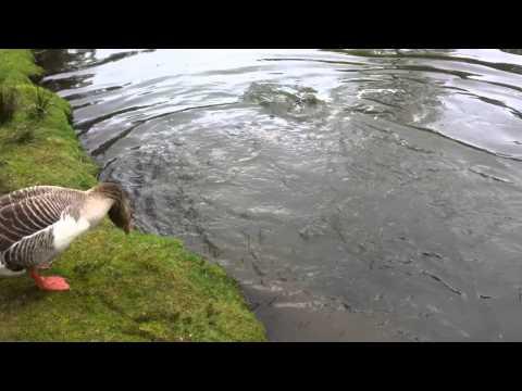Salmon Farm Chudleigh Tasmania