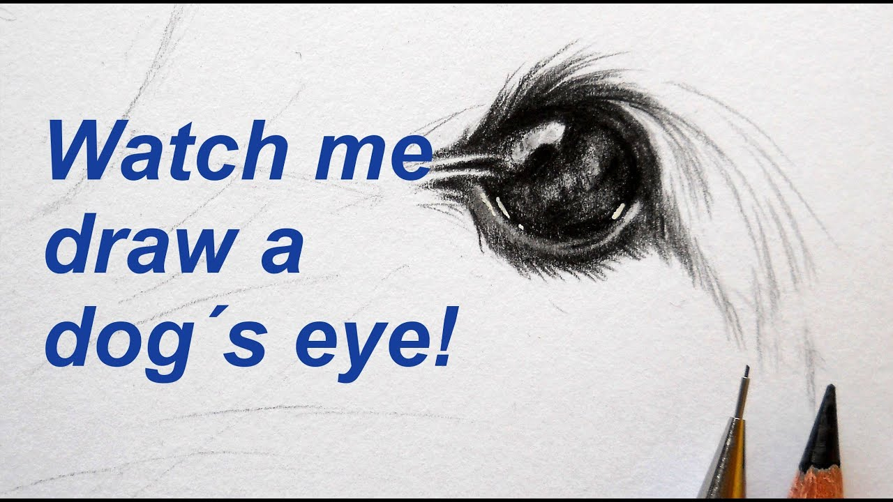 drawing a dog s eye time lapse youtube