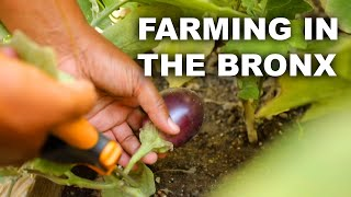 A Black-Owned Farm Fights Food Deserts In The Bronx
