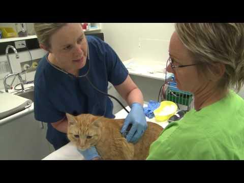 Cat Blood Donation