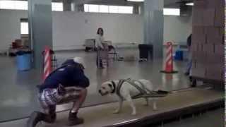 самые сильные собаки в мире 5000 pounds!!