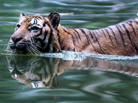 Kuala Lumpur National Zoo Зоопарк Куала-Лумпур (Zoo Negara)