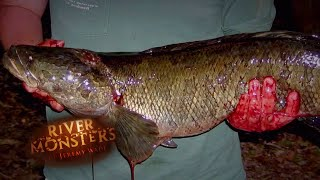 Catching A Snakehead - River Monsters