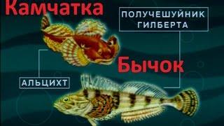 Диалоги о рыбалке - 157 - Щука. Река Маночь, Веселовское водохранилиле, ловля на спиннинг щуки.