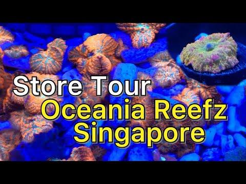 FTRTV Store Tour - Oceania Reefz Aquarium Singapore
