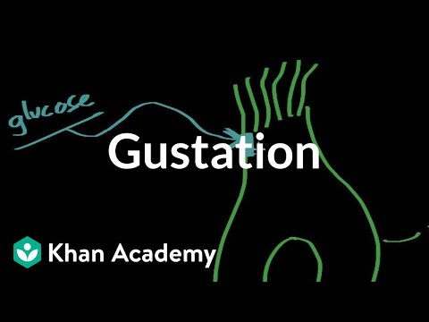 Gustation - structure and function | Processing the Environment | MCAT | Khan Academy