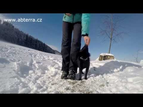 Schipperke Gram - puppy tricks