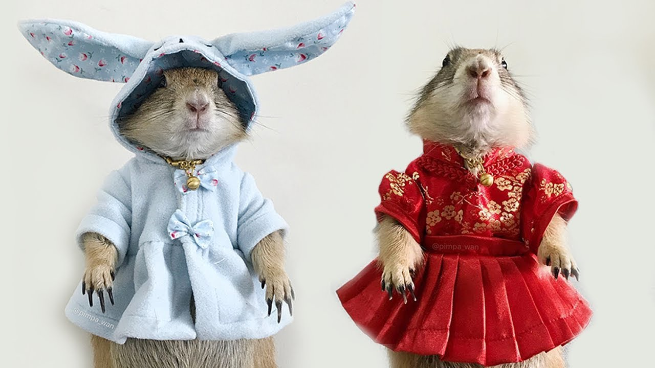 Rescued Prairie Dog Model Loves Wearing Tiny Dresses And Sweaters