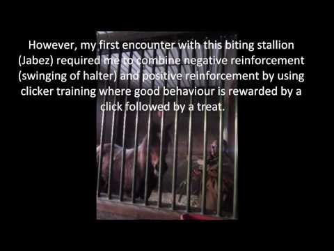 Horse Behavior and Chronic Stress: Aggression, Biting, Kicking, Striking