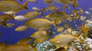 ПОДВОДНЫЙ МИР Рыба море океан видео про рыб UNDERWATER WORLD Fish sea ocean video about fish