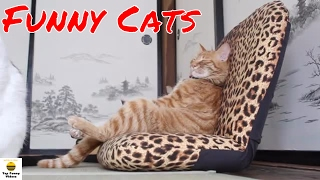 Try Not To Laugh Challenge - 🐱 Funny Cats Compilation 2017 …