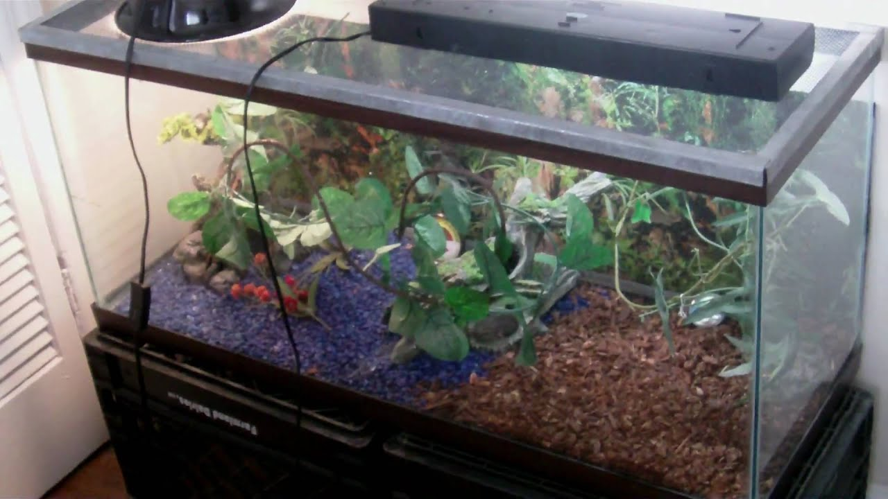 Green Anole Tank Setup Youtube,Round Ripple Crochet Pattern