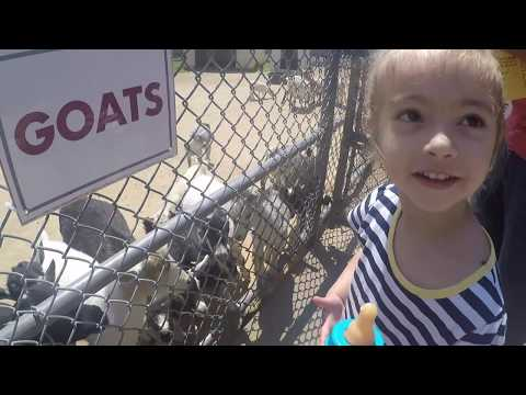 Petting Zoo, pet & feed the animals + free ponie rides!