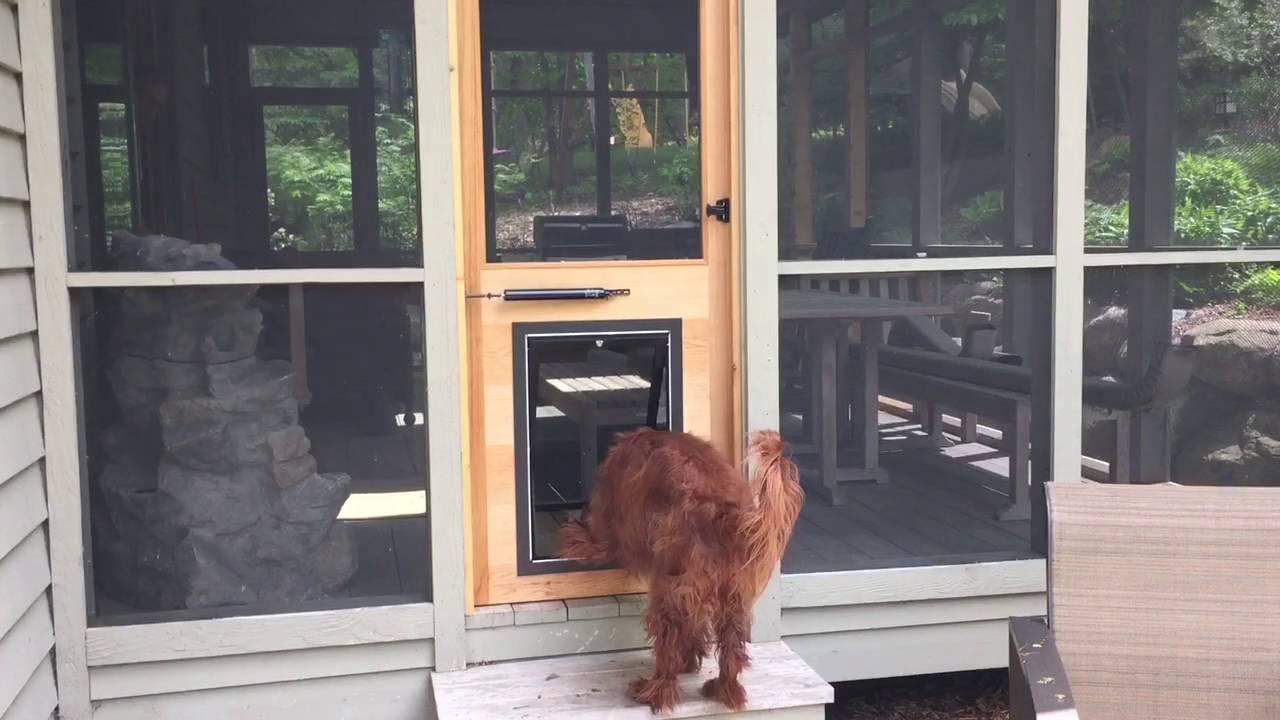 Dog Door Installed In Custom Built Cedar Door on Screen ...
