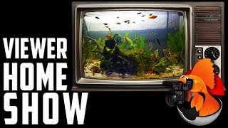 AWESOME POND in this Viewer Home Show