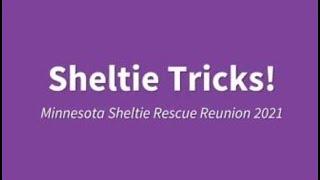 Sheltie Tricks 2021