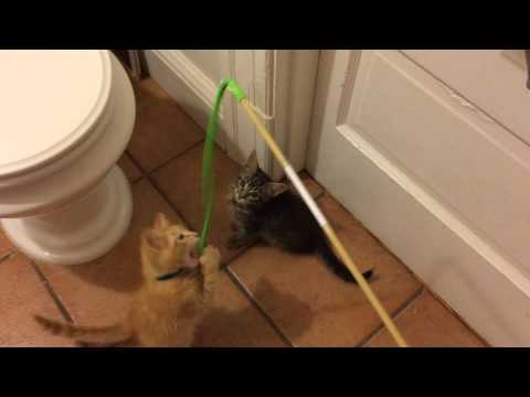 Ragamuffin & Orange Dude attack the noodle!