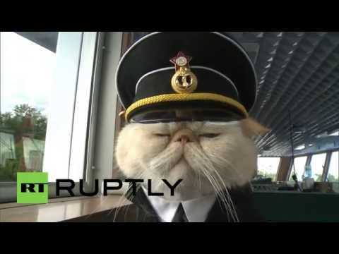 Russia: Meet the cat sailors making waves from Moscow to St. Petersburg