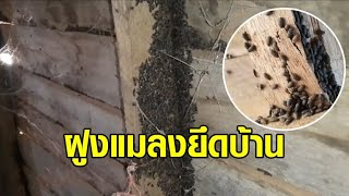ขนลุก! กองทัพแมลงปีกแข็งบุกยึดบ้าน คลานยุ่บยั่บ ส่งกลิ่นเหม็น คนอาศัยแทบไม่ได้