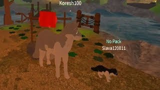 Жизнь ВОЛКА СИМУЛЯТОР роблокс Окружающий мир глазами волка Wolves' Life 3 roblox