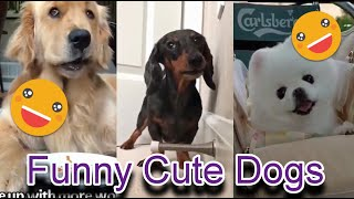 Very Funny And Cute Dogs Of September 2020