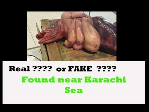 Karachi Fishery - Unknown species... found near Karachi Sea,  is it real?  Breaking News
