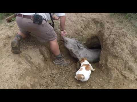 Surprise warthog in the hole.  Eastern cape South Africa winterberg safaris