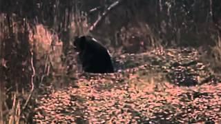 Приколы охотников на медведя.