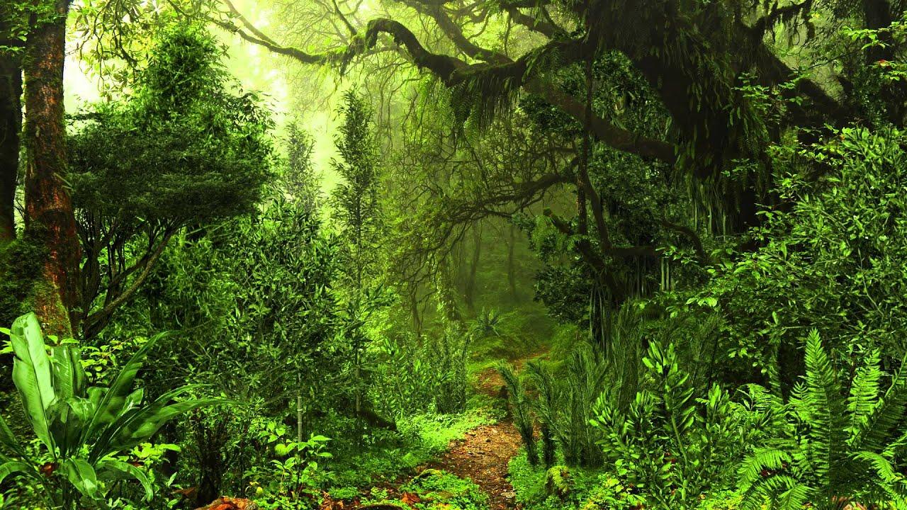 Джунгли картинка анимация, нели деревья смешные