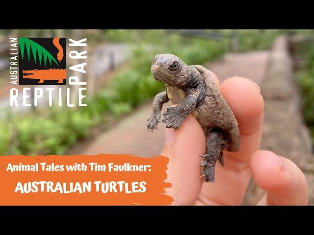 ANIMAL TALES WITH TIM FAULKNER | EPISODE 32 | FRESHWATER TURTLES