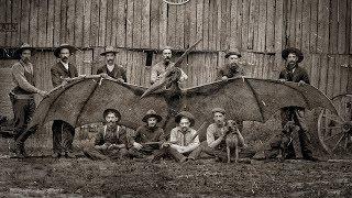 Мифы о динозаврах, в которые мы верим