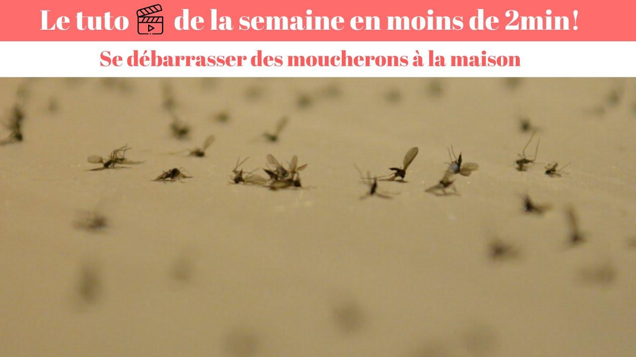 Comment Se Débarrasser De Moucherons Naturellement anti moucheron - comment se débarrasser des invasions de moucherons?