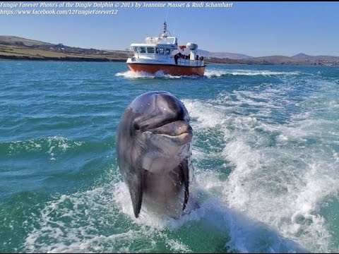 I saw Fungi the Dingle Dolphin in Ireland - Irish Bucket List (Ep #17)