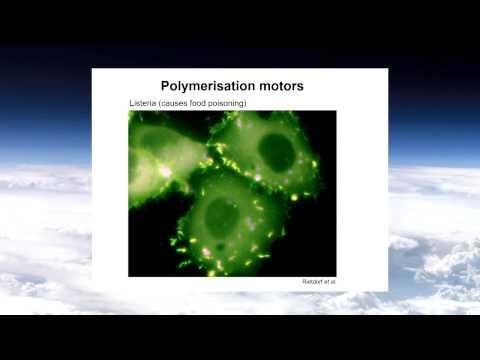 Ross Lockwood Promise and Perils of Nanotechnology Winter 2014