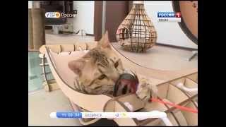 В Пензе со своим театром кошек выступит Юрий Куклачев