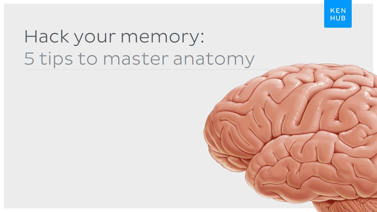 Hack your memory: 5 tips to master anatomy once and for all - YouTube