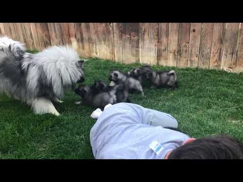 PuppyFinder.com : First time playing with daddy outside