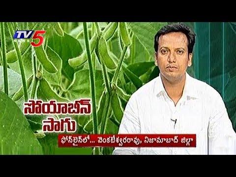 సోయాబీన్ సాగు - మెళకువలు | Techniques of Soybean Cultivation | Annapurna | TV5 News