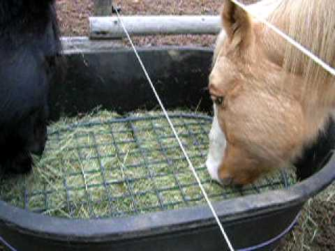 horse diy shot pm screen feed hay feeder nation feeders at slow
