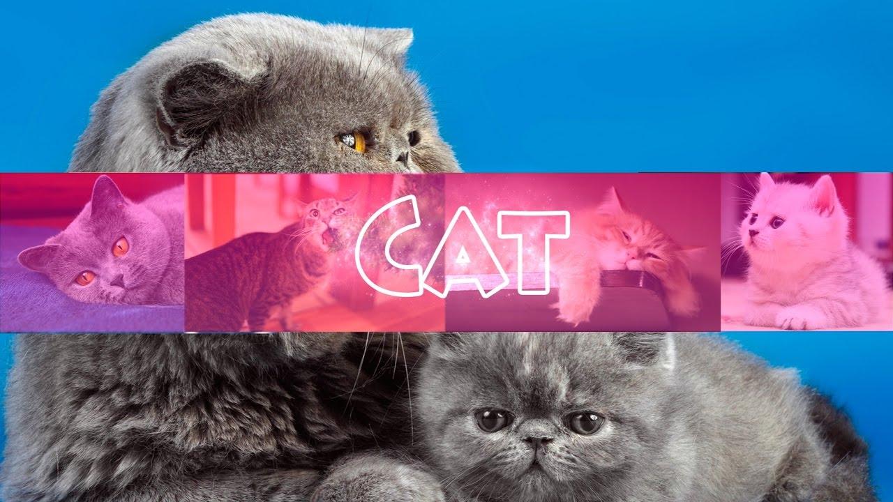 Картинки с надписью даша котик для канала